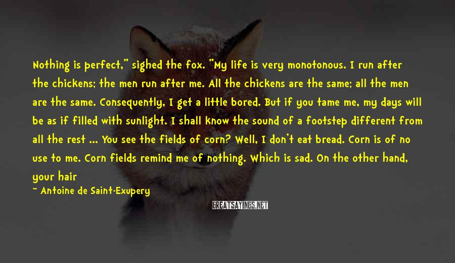 "Antoine De Saint-Exupery Sayings: Nothing Is Perfect,"" Sighed The Fox. ""My Life Is Very Monotonous. I Run After The Chickens; The Men Run After Me. All The Chickens Are The Same; All The Men Are The Same. Consequently, I Get A Little Bored. But If You Tame Me, My Days Will Be As If Filled With Sunlight. I Shall Know The Sound Of A Footstep Different From All The Rest ... You See The Fields Of Corn? Well, I Don't Eat Bread. Corn Is Of No Use To Me. Corn Fields Remind Me Of Nothing. Which Is Sad. On The Other Hand, Your Hair Is The Colour Of Gold. So Think How Wonderful It Will Be When You Have Tamed Me. The Corn, Which Is Golden, Will Remind Me Of You. And I Will Come To Love The Sound Of The Wind In The Field Of Corn.The Fox Fell Silent And Looked Steadily At The Little Prince For A Long Time.""Please,"" He Said, ""tame Me!"
