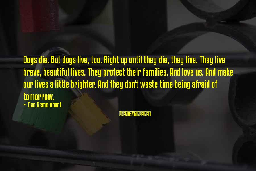 A Brighter Tomorrow Sayings By Dan Gemeinhart: Dogs die. But dogs live, too. Right up until they die, they live. They live