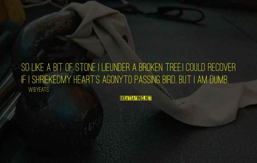 A Heart Broken Sayings By W.B.Yeats: So like a bit of stone I lieUnder a broken tree.I could recover if I