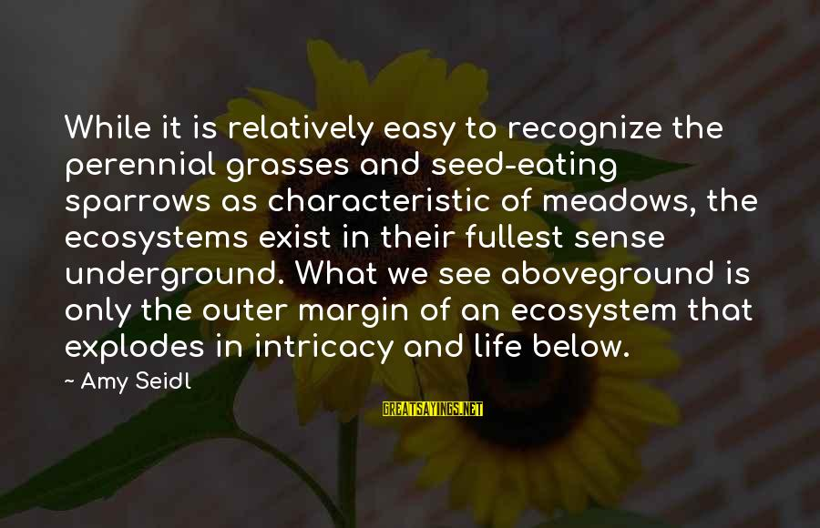 Aboveground Sayings By Amy Seidl: While it is relatively easy to recognize the perennial grasses and seed-eating sparrows as characteristic
