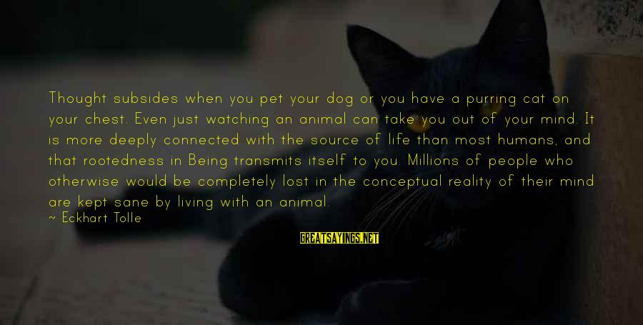 Aeternaque Sayings By Eckhart Tolle: Thought subsides when you pet your dog or you have a purring cat on your