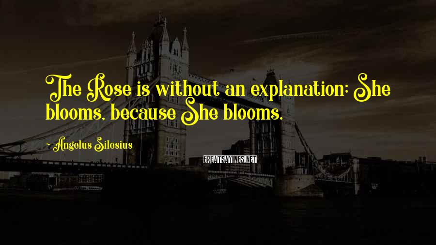Angelus Silesius Sayings: The Rose is without an explanation; She blooms, because She blooms.
