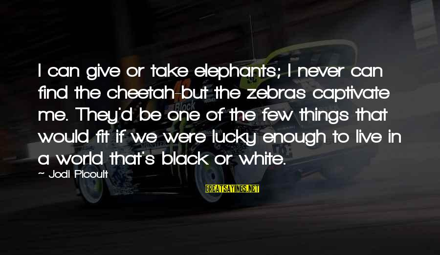 Animals In Zoos Sayings By Jodi Picoult: I can give or take elephants; I never can find the cheetah-but the zebras captivate
