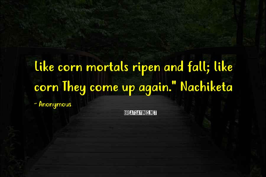 "Anonymous Sayings: Like corn mortals ripen and fall; like corn They come up again."" Nachiketa"