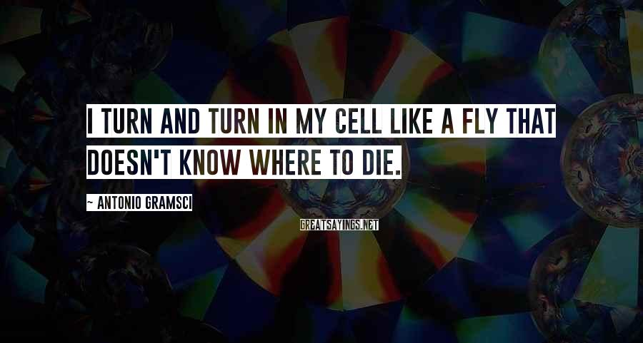 Antonio Gramsci Sayings: I turn and turn in my cell like a fly that doesn't know where to