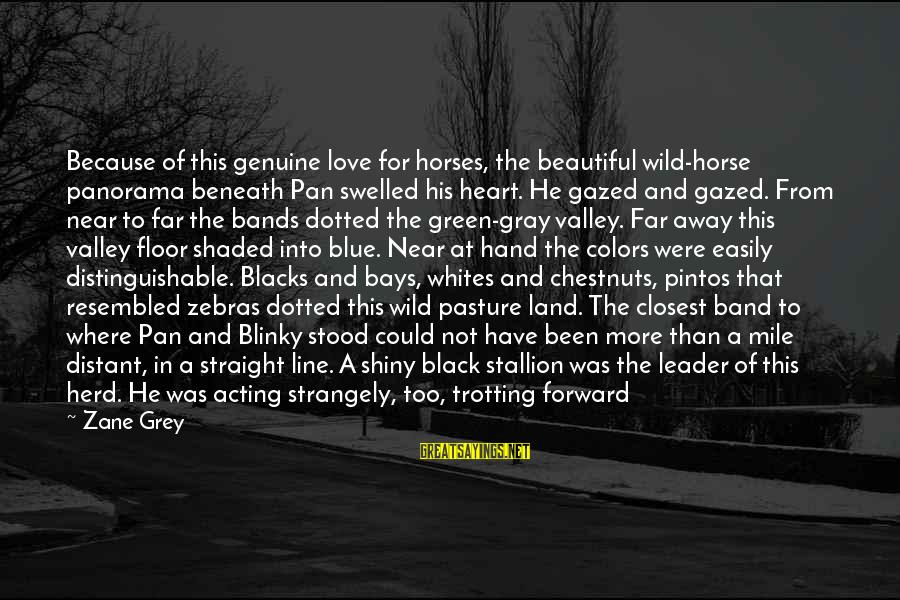Aztec Queen Sayings By Zane Grey: Because of this genuine love for horses, the beautiful wild-horse panorama beneath Pan swelled his