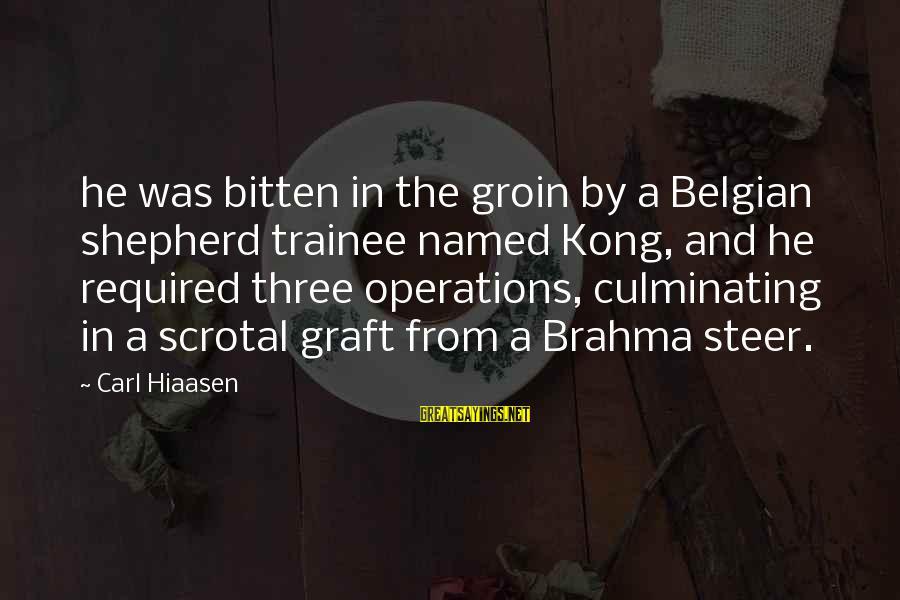 Belgian Sayings By Carl Hiaasen: he was bitten in the groin by a Belgian shepherd trainee named Kong, and he