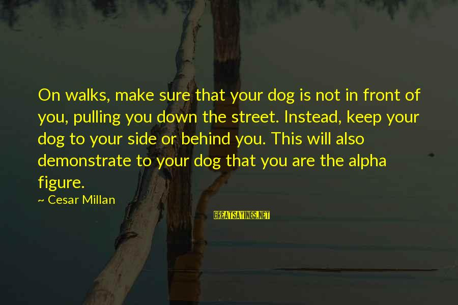 Best Alpha Dog Sayings By Cesar Millan: On walks, make sure that your dog is not in front of you, pulling you