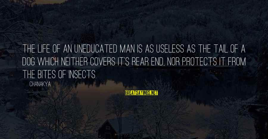Best Dog And Man Sayings By Chanakya: The life of an uneducated man is as useless as the tail of a dog