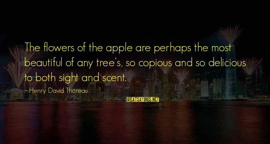 Both Are Beautiful Sayings By Henry David Thoreau: The flowers of the apple are perhaps the most beautiful of any tree's, so copious