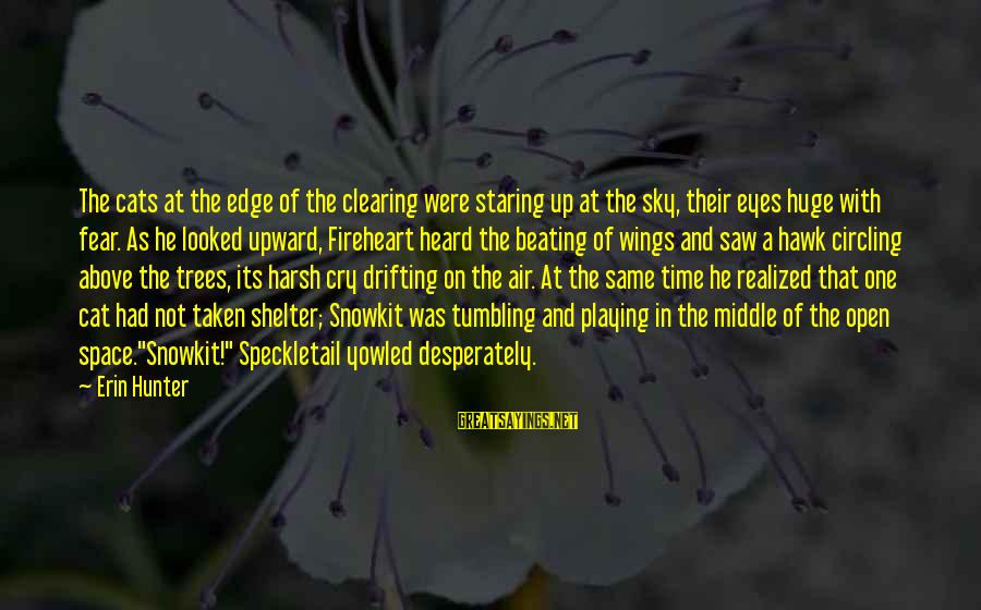 Cat Shelter Sayings By Erin Hunter: The cats at the edge of the clearing were staring up at the sky, their