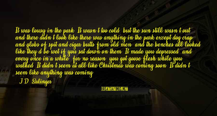 Christmas Is Coming Sayings By J.D. Salinger: It was lousy in the park. It wasn't too cold, but the sun still wasn't