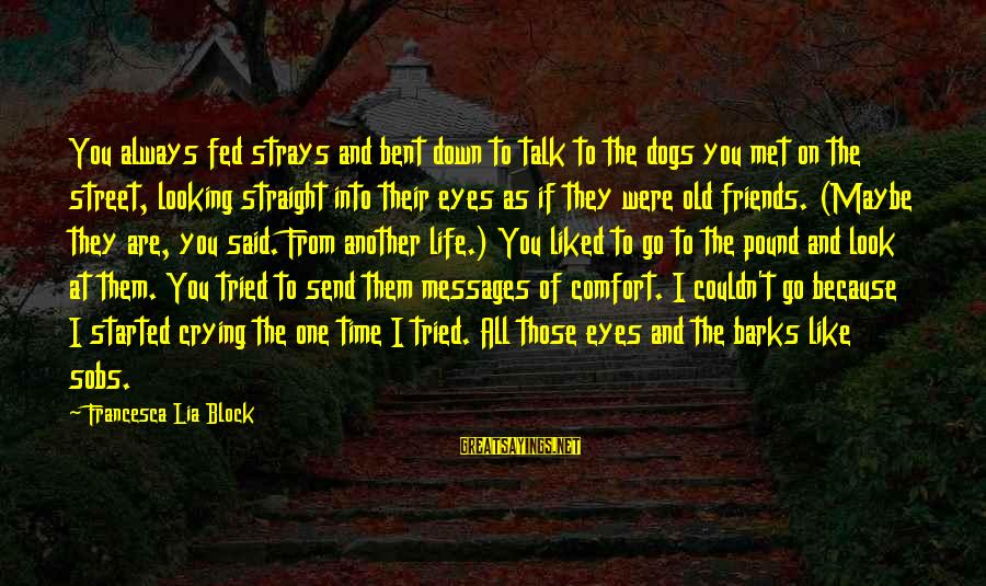 Comfort And Friends Sayings By Francesca Lia Block: You always fed strays and bent down to talk to the dogs you met on
