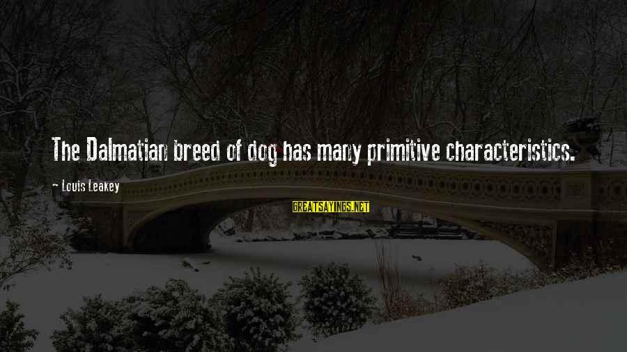 Dalmatian Dog Sayings By Louis Leakey: The Dalmatian breed of dog has many primitive characteristics.