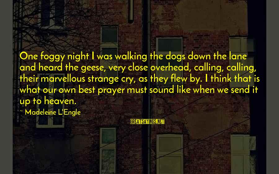 Dogs And Heaven Sayings By Madeleine L'Engle: One foggy night I was walking the dogs down the lane and heard the geese,