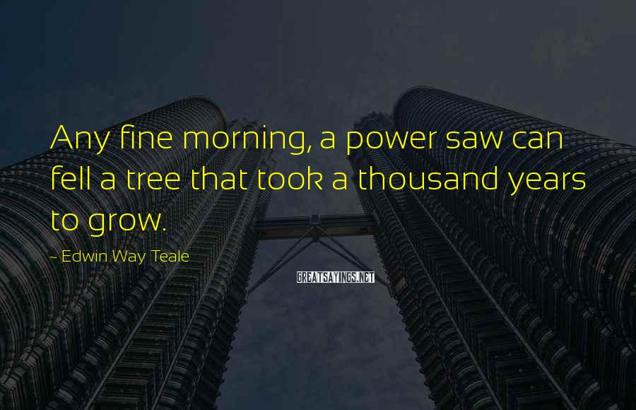 Edwin Way Teale Sayings: Any fine morning, a power saw can fell a tree that took a thousand years