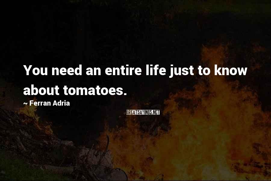 Ferran Adria Sayings: You need an entire life just to know about tomatoes.