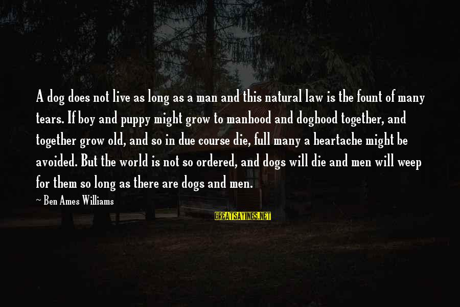 Fount Sayings By Ben Ames Williams: A dog does not live as long as a man and this natural law is
