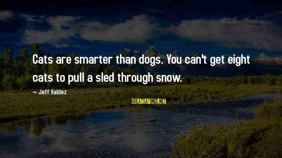 Funny Dogs And Cats Sayings By Jeff Valdez: Cats are smarter than dogs. You can't get eight cats to pull a sled through