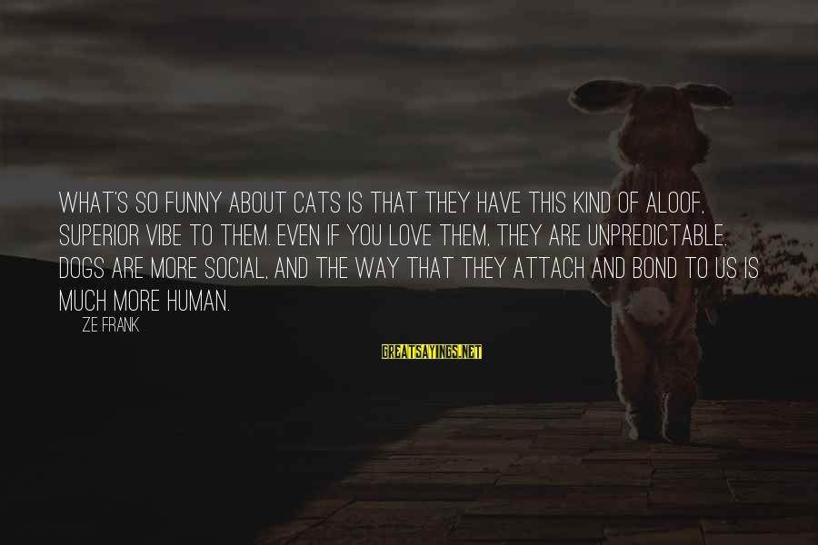 Funny Dogs And Cats Sayings By Ze Frank: What's so funny about cats is that they have this kind of aloof, superior vibe
