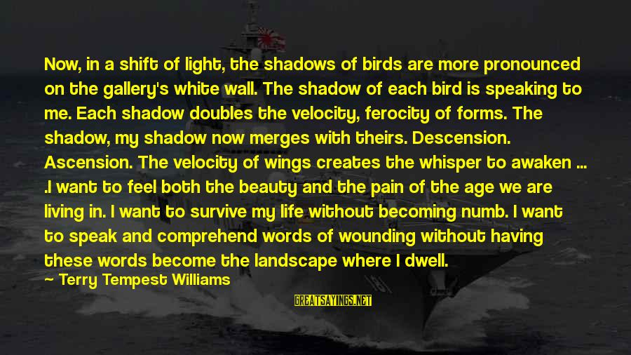 Gallery's Sayings By Terry Tempest Williams: Now, in a shift of light, the shadows of birds are more pronounced on the