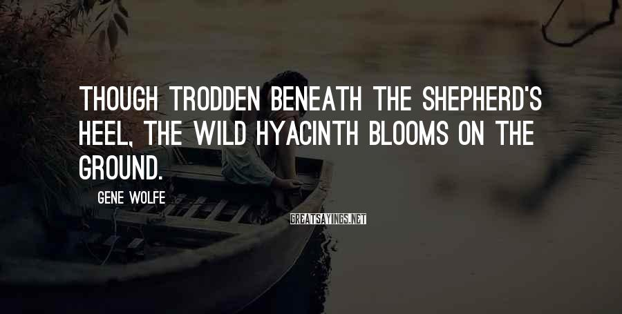 Gene Wolfe Sayings: Though trodden beneath the shepherd's heel, the wild hyacinth blooms on the ground.