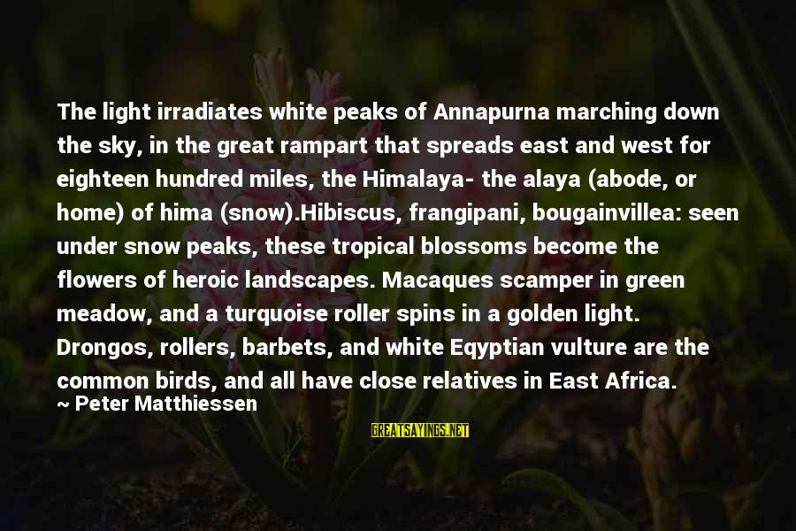 Green Miles Sayings By Peter Matthiessen: The light irradiates white peaks of Annapurna marching down the sky, in the great rampart