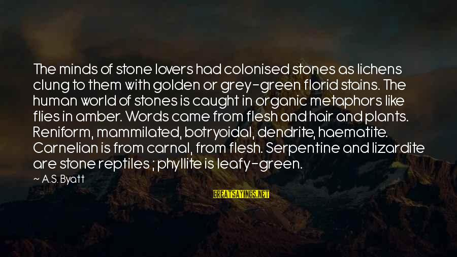 Green Plants Sayings By A.S. Byatt: The minds of stone lovers had colonised stones as lichens clung to them with golden