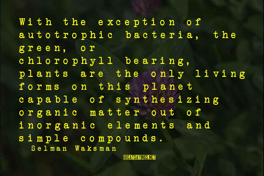 Green Plants Sayings By Selman Waksman: With the exception of autotrophic bacteria, the green, or chlorophyll-bearing, plants are the only living