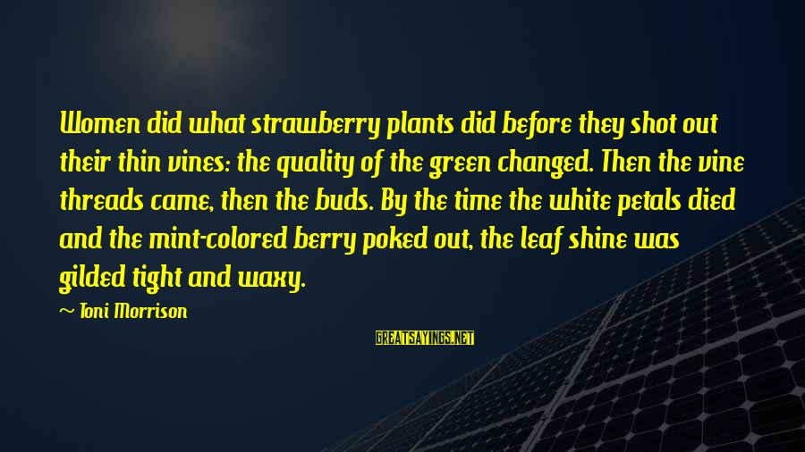Green Plants Sayings By Toni Morrison: Women did what strawberry plants did before they shot out their thin vines: the quality