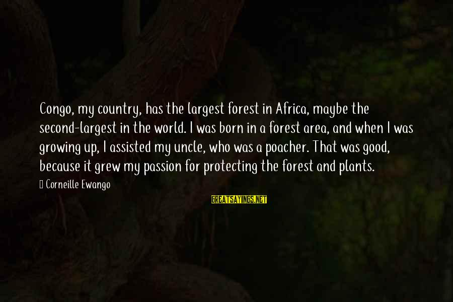 Growing Plants Sayings By Corneille Ewango: Congo, my country, has the largest forest in Africa, maybe the second-largest in the world.