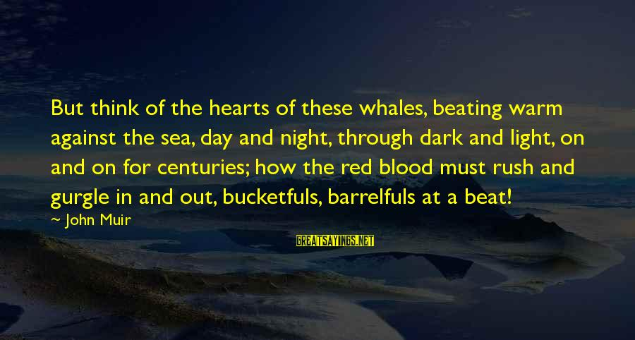 Gurgle Sayings By John Muir: But think of the hearts of these whales, beating warm against the sea, day and