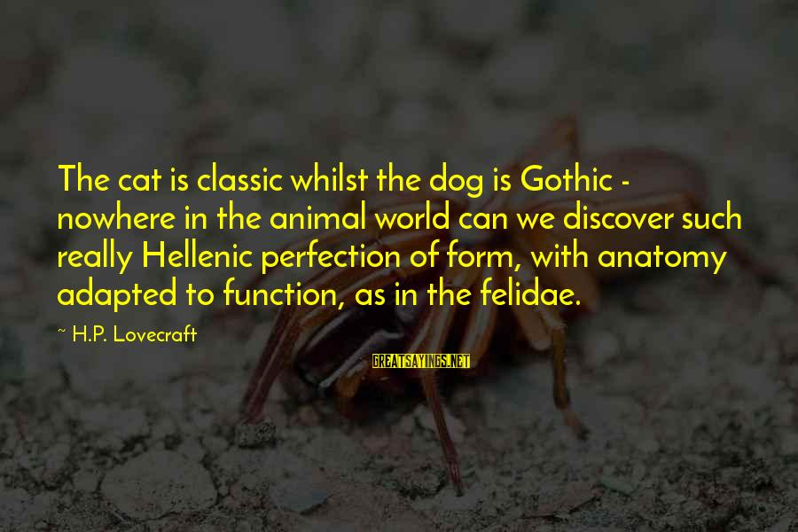 H.p. Lovecraft Cat Sayings By H.P. Lovecraft: The cat is classic whilst the dog is Gothic - nowhere in the animal world