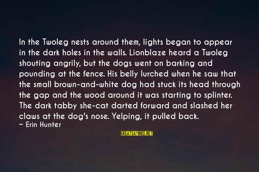 Head Pounding Sayings By Erin Hunter: In the Twoleg nests around them, lights began to appear in the dark holes in