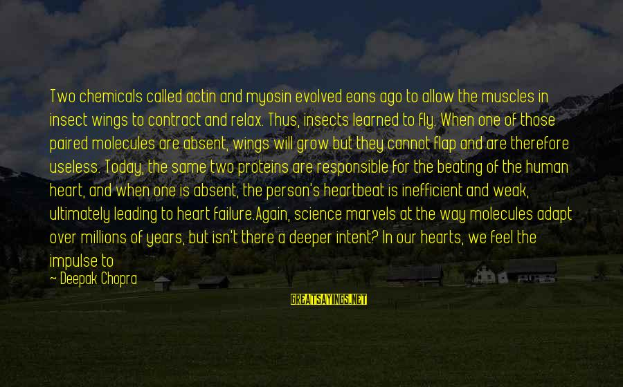 Heart Over Mind Sayings By Deepak Chopra: Two chemicals called actin and myosin evolved eons ago to allow the muscles in insect