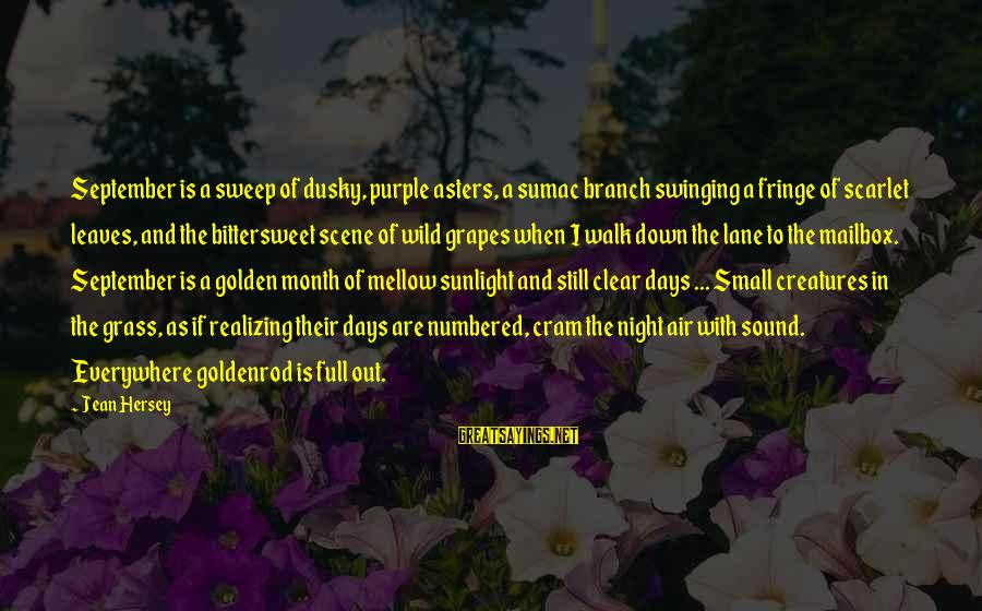 Hersey's Sayings By Jean Hersey: September is a sweep of dusky, purple asters, a sumac branch swinging a fringe of