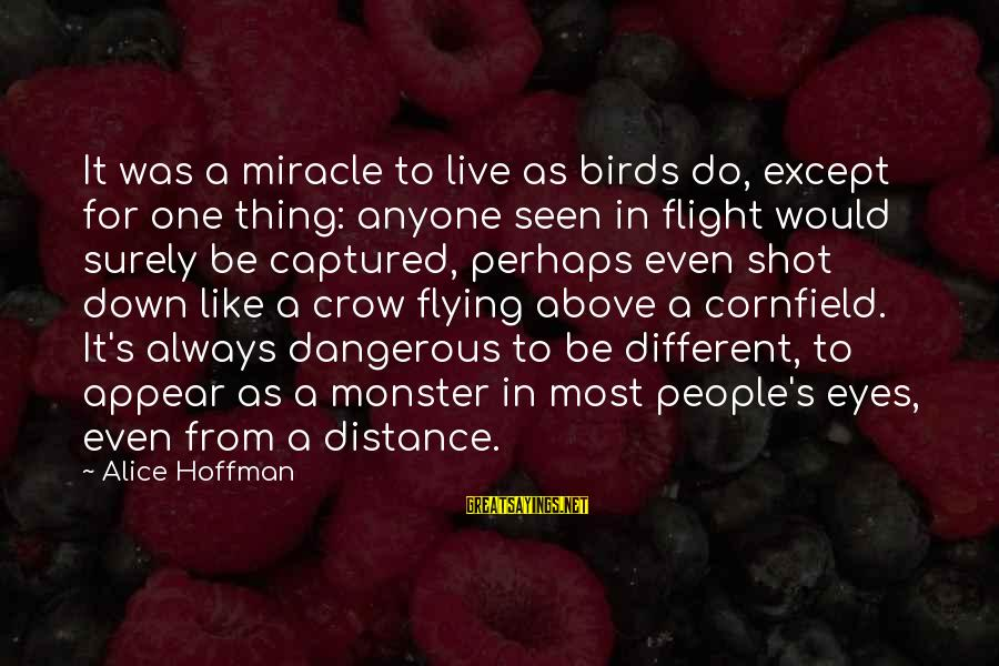 Hoffman's Sayings By Alice Hoffman: It was a miracle to live as birds do, except for one thing: anyone seen