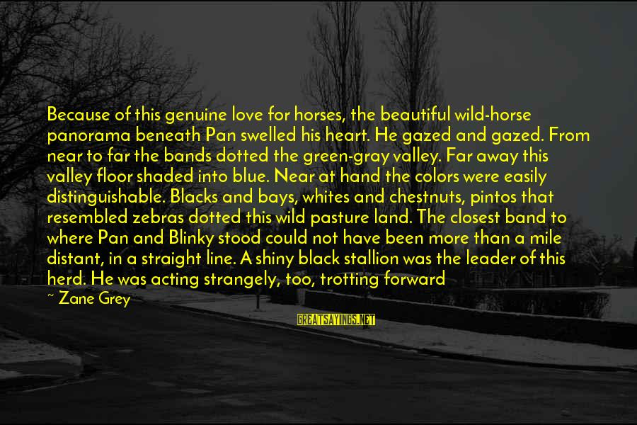Horse Love Sayings By Zane Grey: Because of this genuine love for horses, the beautiful wild-horse panorama beneath Pan swelled his