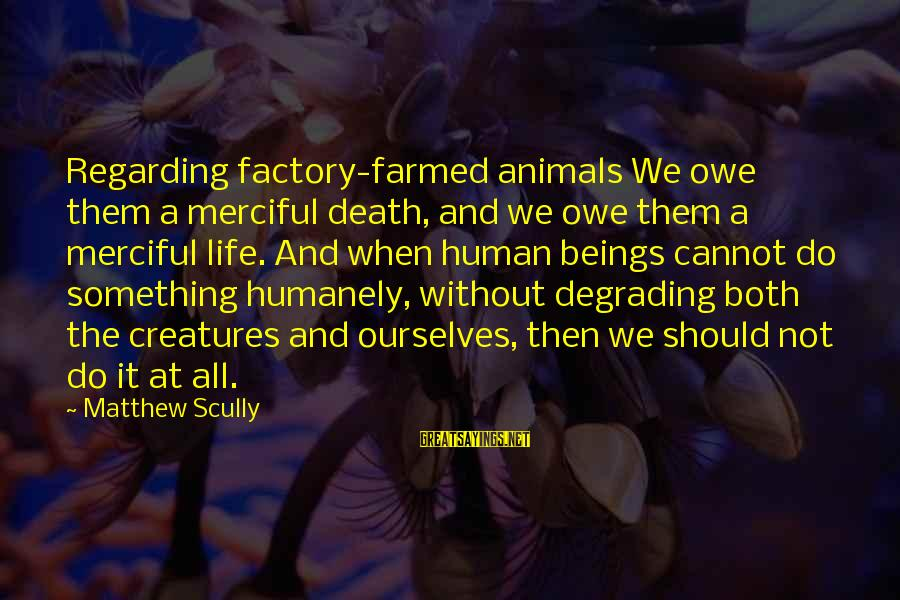 Humanely Sayings By Matthew Scully: Regarding factory-farmed animals We owe them a merciful death, and we owe them a merciful
