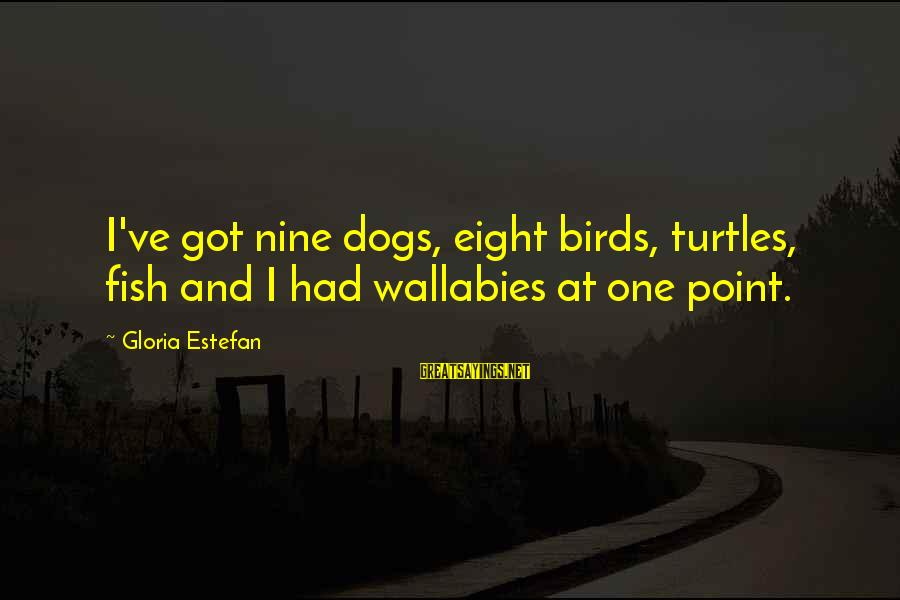 I Got Over U Sayings By Gloria Estefan: I've got nine dogs, eight birds, turtles, fish and I had wallabies at one point.