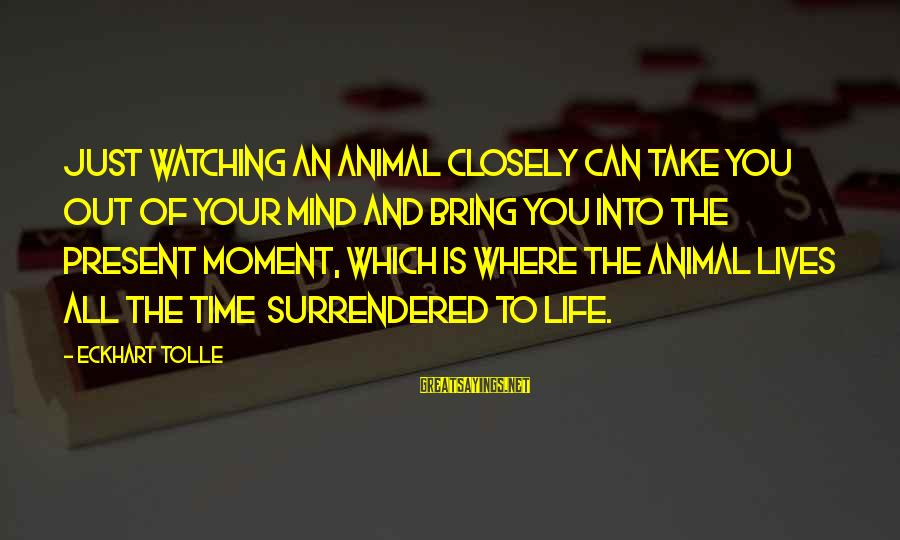 Jack Finch Sayings By Eckhart Tolle: Just watching an animal closely can take you out of your mind and bring you
