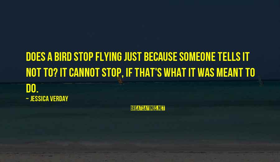 Jessica Verday Sayings By Jessica Verday: Does a bird stop flying just because someone tells it not to? It cannot stop,