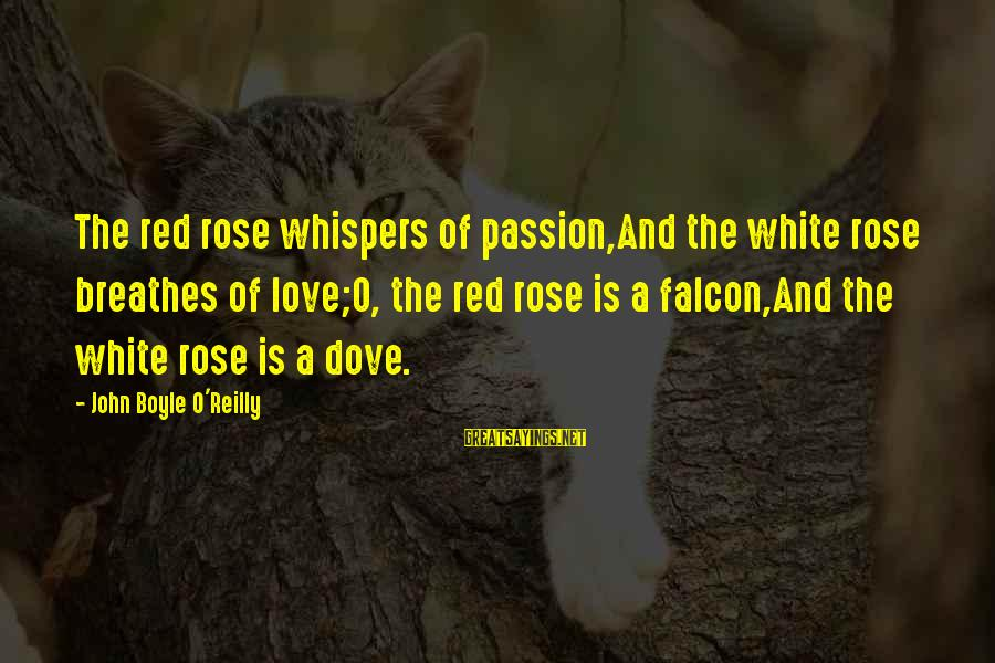 John Boyle O'reilly Sayings By John Boyle O'Reilly: The red rose whispers of passion,And the white rose breathes of love;O, the red rose