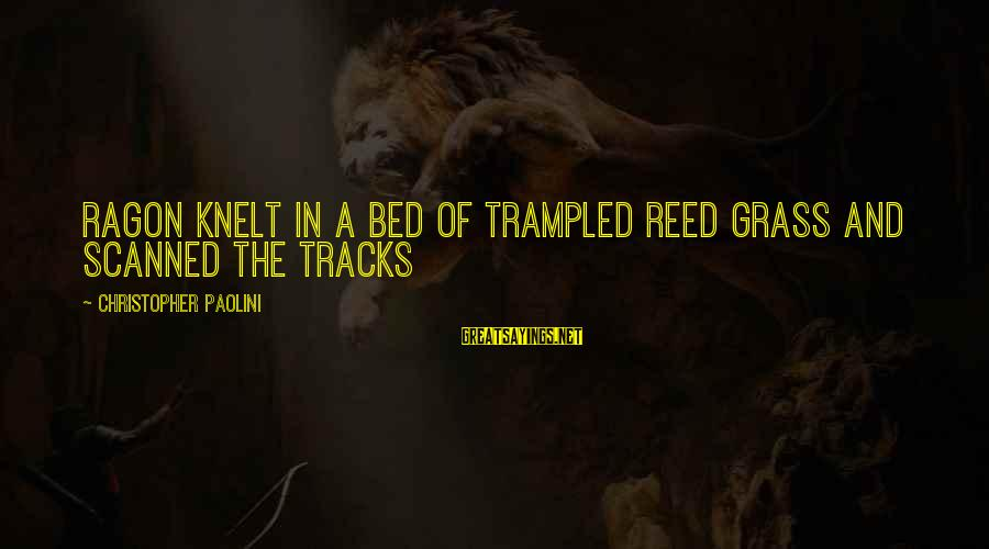 Knelt Sayings By Christopher Paolini: Ragon knelt in a bed of trampled reed grass and scanned the tracks