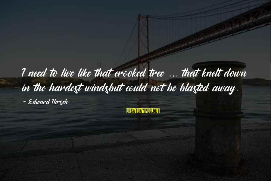 Knelt Sayings By Edward Hirsch: I need to live like that crooked tree ... that knelt down in the hardest