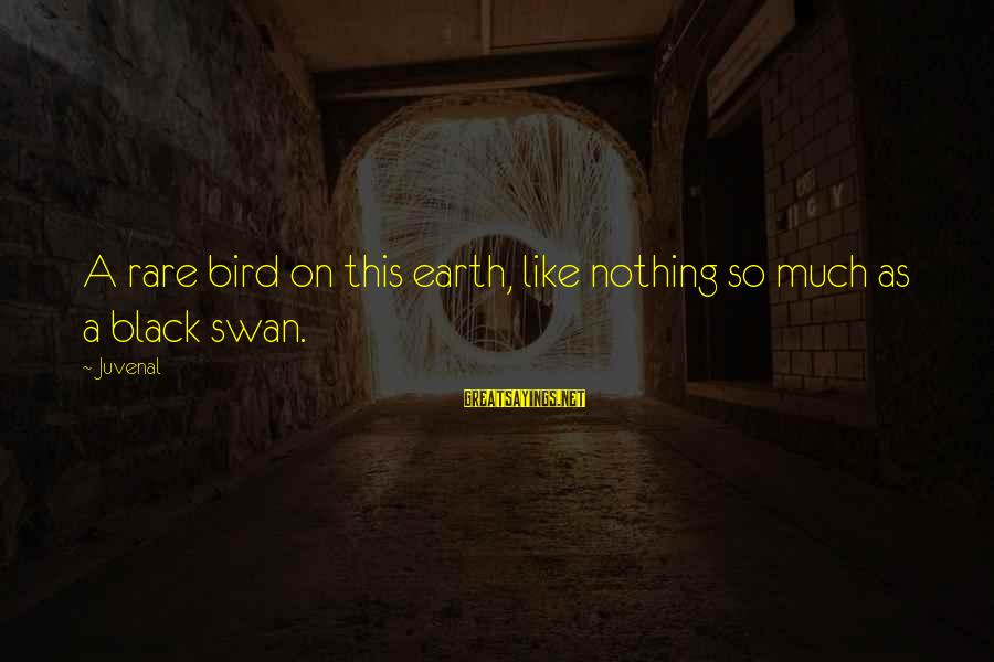 Like A Bird Sayings By Juvenal: A rare bird on this earth, like nothing so much as a black swan.