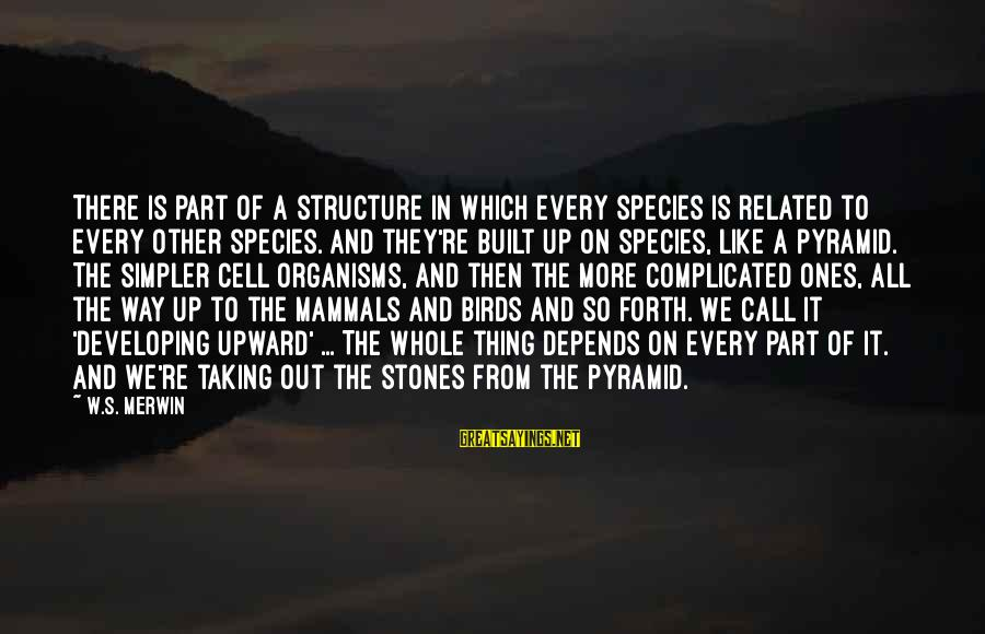 Like A Bird Sayings By W.S. Merwin: There is part of a structure in which every species is related to every other