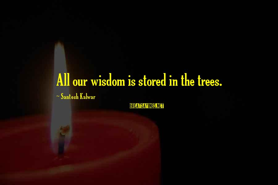 Living Green Sayings By Santosh Kalwar: All our wisdom is stored in the trees.