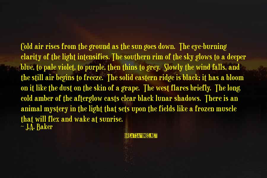 Long Shadows Sayings By J.A. Baker: Cold air rises from the ground as the sun goes down. The eye-burning clarity of