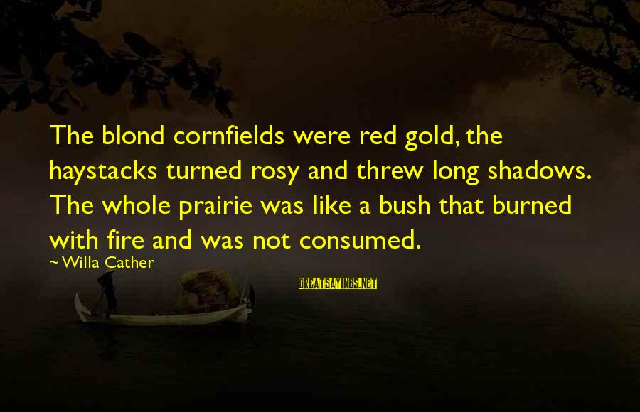 Long Shadows Sayings By Willa Cather: The blond cornfields were red gold, the haystacks turned rosy and threw long shadows. The
